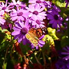 Butterfly by Keith G. Hawley
