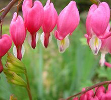MY BLEEDING HEART by dmsquare