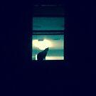 Creepy Cat in the Window by Noah  Waters