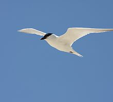 Gliding along by Dean Redsell