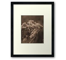 Softly Came the Afternoon Framed Print
