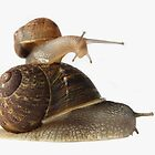 Snail Pace by Elaine Harriott