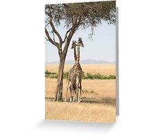 Maasai Giraffes. Males Necking. Maasai Mara, Kenya  Greeting Card