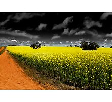 Conola Fields by Kirk  Hille