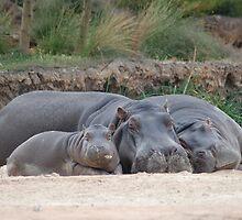 Family of Hippos Sleeping by Joseph Bailouni