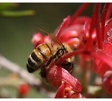 Bee September 2010 Photographic Print