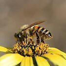 Bee November 2011 by saharabelle