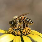 Bee November 2011 by saharabelle