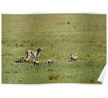 Cheetah and cubs Poster