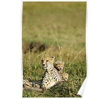 Cheetah happy family Poster