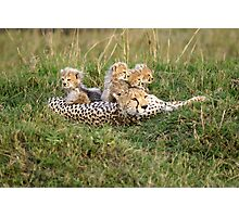 One happy cheetah family Photographic Print