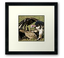 Vulture fight Framed Print