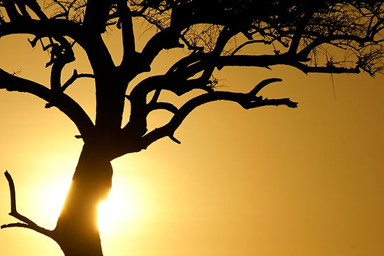 Sun on the tree trunk by Yves Roumazeilles