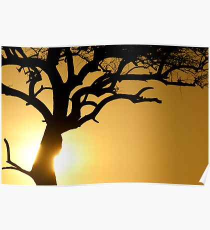Sun on the tree trunk Poster