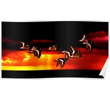 Oystercatcher Sunset Poster