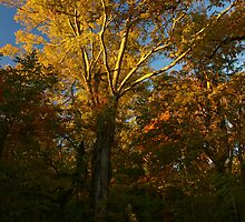 Leaves of Gold by Richard G Witham