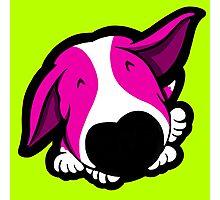 Big Nose Bull Terrier Shocking Pink Photographic Print