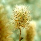 Fuzzy Seeds 1 by Maureen Kay