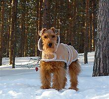 """Wintertime fashion"" by Katariina Lonnakko"