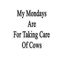 My Mondays Are For Taking Care Of Cows  Photographic Print