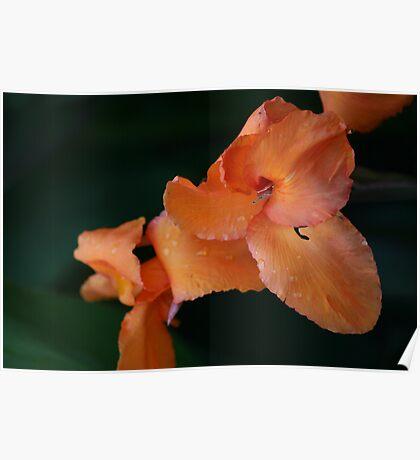 Orange Creme Poster