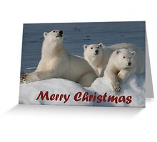 Bears On Ice - Christmas Card Greeting Card