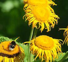Summer Buzzing by TriciaDanby