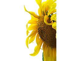 Curly sunshine petals Photographic Print