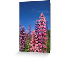 Colourful Lupins Greeting Card