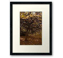 Autumn glade. Framed Print