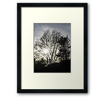 Mystery Tree Framed Print