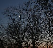 tree branches by DreamCatcher/ Kyrah