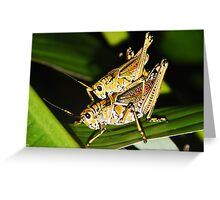 Two Grasshoppers Greeting Card
