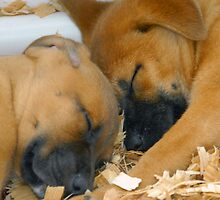 Sleeping Puppy's by David Lee Thompson