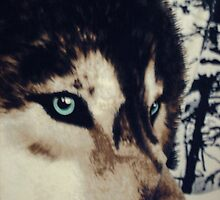 EYES OF THE WOLF by Debra Willis