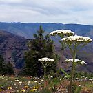Hell's Canyon Floral by pfeifferphotos