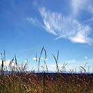 Grassland by pfeifferphotos
