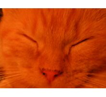 Sleeping Ollie Kitten(Orange) Photographic Print