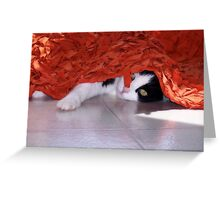 Peek  A Boo Greeting Card