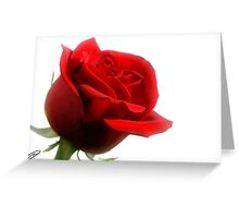 Rose on White Greeting Card
