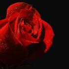 Rose  by DavidWayne