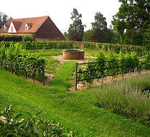 Washington's Garden by Laurie Puglia