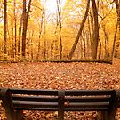 Sit and Enjoy the Beauty by Tracy Jule