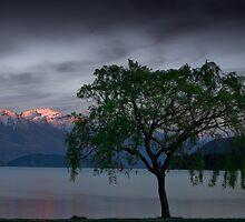 Wanaka Willow - Spring by Neil