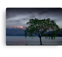 Wanaka Willow - Spring Canvas Print