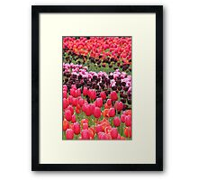 Field of Tulips - Canberra Floriade Framed Print