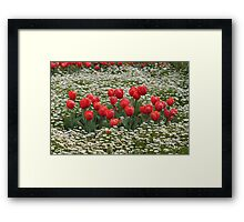 Tulips in a Field of Flowers - Canberra Floriade Framed Print