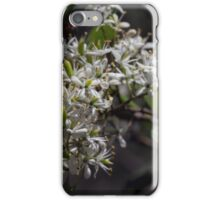 White young Microphylla clematis bush flowers DCT 20150107 1418 iPhone Case/Skin