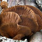 Unidentified Tree Fungi by Len Bomba