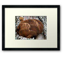 Unidentified Tree Fungi Framed Print